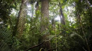 Νέο ρεκόρ Γκίνες: 66 εκατομμύρια δέντρα σε 12 ώρες