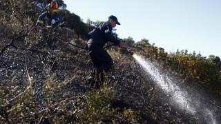 Ζάκυνθος: Σε εξέλιξη μεγάλη πυρκαγιά - Κάηκαν 250 στρέμματα δασικής έκτασης