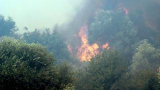 Κρήτη: Μαίνεται η φωτιά στην Ανατολή Ιεράπετρας, περιορίστηκε στους Πεύκους Σητείας