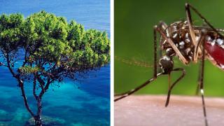 Σε «καραντίνα» περιοχές της Ελλάδας για ελονοσία