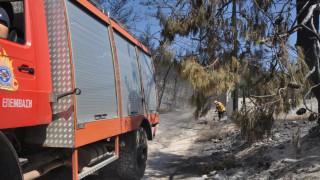 Στις στάχτες πευκοδάσος στη Ζάκυνθο - Πρόβλημα στην ηλεκτροδότηση από την φωτιά