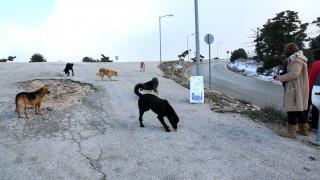 Πάρνηθα: Τα αδέσποτα κατοικίδια απειλούν την άγρια πανίδα