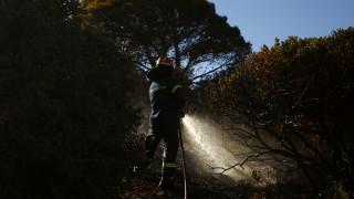 Ξάνθη: Υπό έλεγχο η φωτιά σε δασική περιοχή δίπλα στο ποτάμι του Νέστου