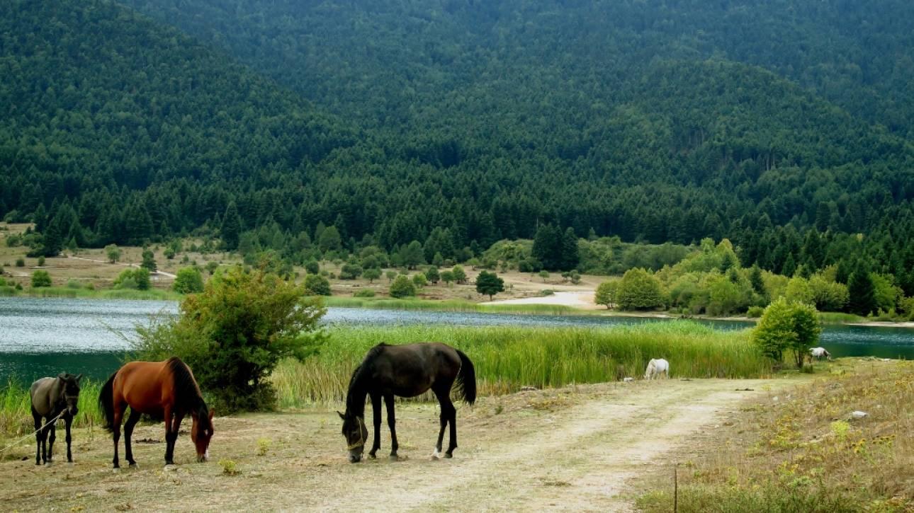 Συλλήψεις για το μέγα σκάνδαλο με το εμπόριο κρέατος αλόγου στην Ευρώπη