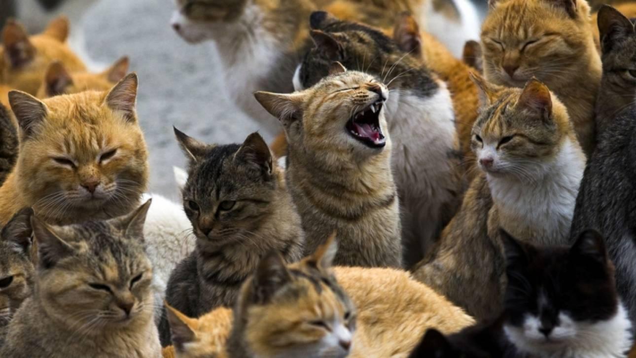 ΗΠΑ: Αποτροπιασμός για τον άνδρα που σκότωσε 21 γάτες και βίασε μία