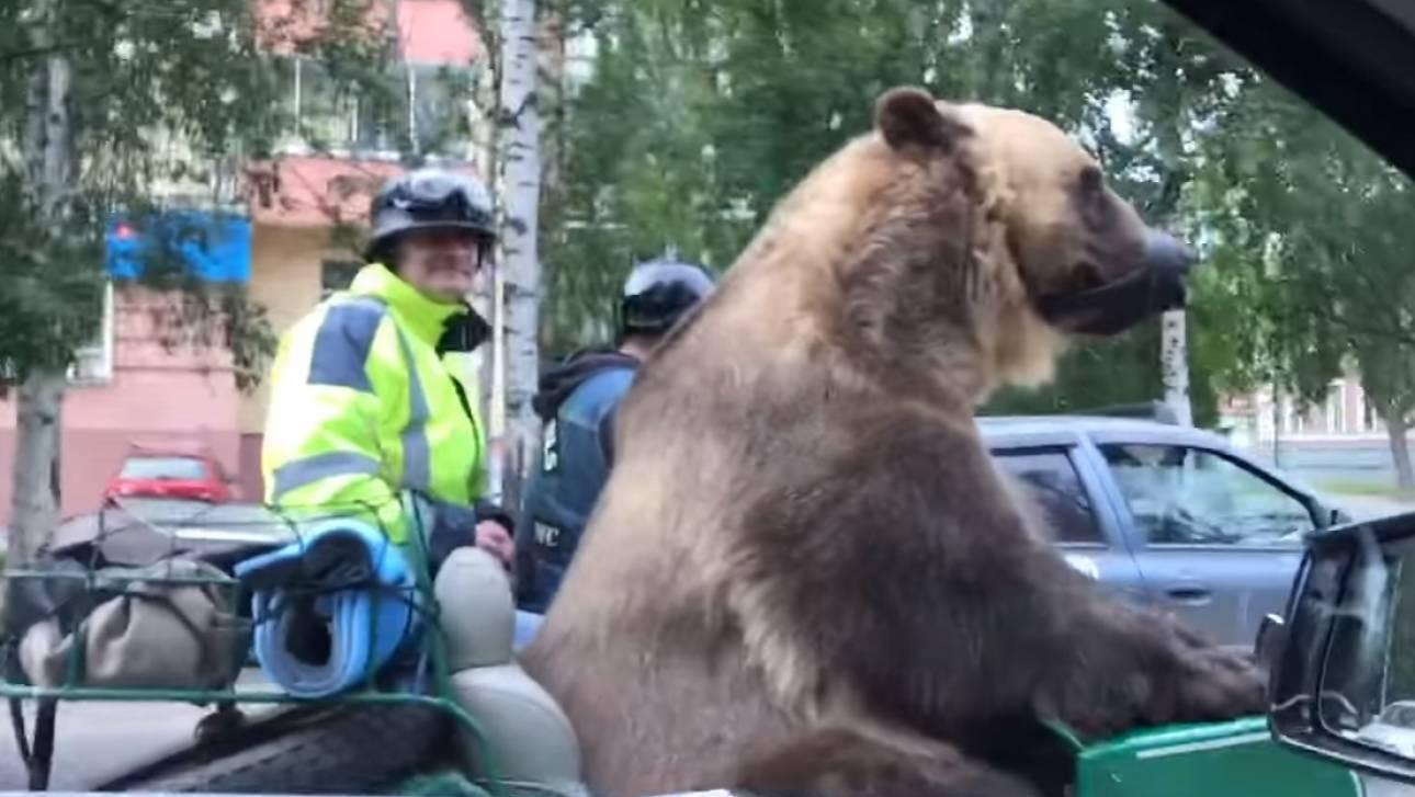 Μόνο στη Ρωσία: Αρκούδος «κόβει» βόλτες με …μηχανή (vids)