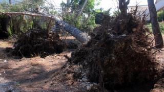 Φαινόμενο Μέδουσα: Έπεσαν δέντρα στη Λάρισα (pics)