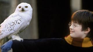 Χάρι Πότερ: Δύο νέα βιβλία & μία έκθεση φέρνει τη μαγεία πίσω