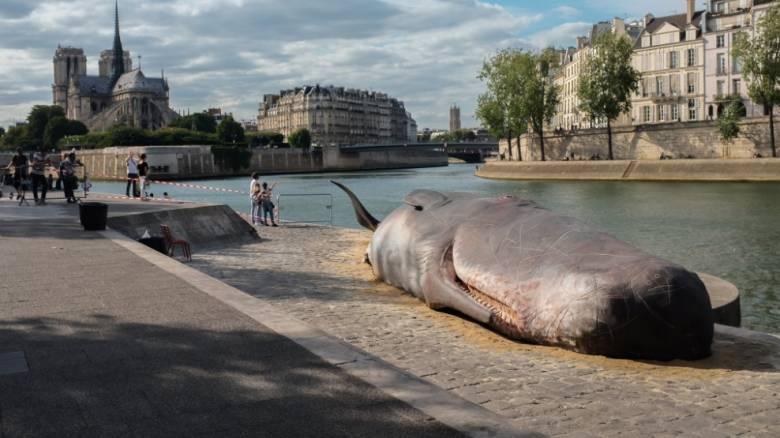 Φάλαινα φυσητήρας ξεβράστηκε στις όχθες του Σηκουάνα - Ή μήπως όχι...