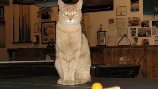 Πέθανε ο... γάτος δήμαρχος χωριού της Αλάσκα (pics&vid)