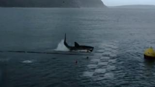 Έγινε η «κούρσα του αιώνα» ανάμεσα στον Φελπς και σε ένα καρχαρία: Κρίθηκε στο φώτο φίνις (pics+vid)