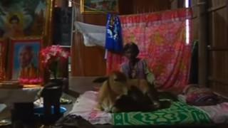 Χήρα πιστεύει ότι ο σύζυγός της μετεμψυχώθηκε σε μοσχαράκι (Vid)