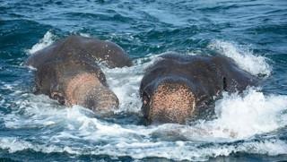 Επιχείρηση διάσωσης δύο ελεφάντων στον… ωκεανό!