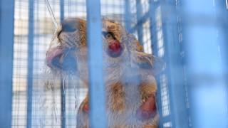 Check up για λιοντάρια, τίγρεις, αρκούδες και ύαινες που γλίτωσαν από την «κόλαση» του Χαλεπιού