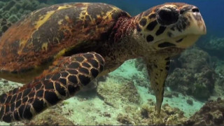 Ενωμένοι για τους ωκεανούς κατά του πλαστικού εφιάλτη