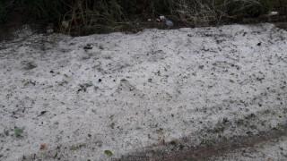 Χαλαζόπτωση και μπουρίνι στην Αν. Φθιώτιδα – Ξεριζώθηκαν δέντρα (pics &vids)