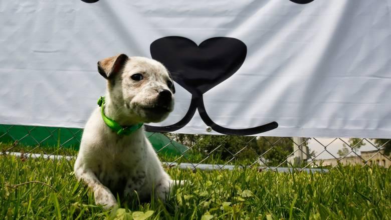 Ο καλύτερος φίλος του ανθρώπου: Πώς ένας σκύλος έσωσε τη ζωή δύο κοριτσιών