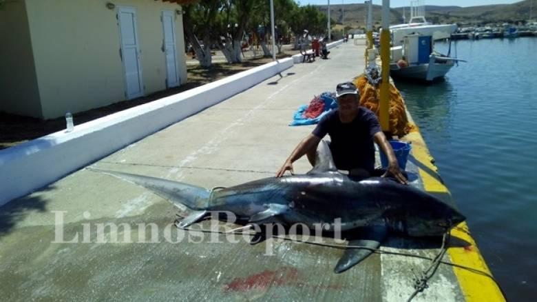 Λήμνος: Στα δίχτυα ψαρά ένας καρχαρίας... 200 κιλών (pics)