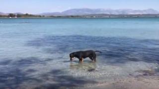 Σκύλος στην Πρέβεζα «τρέλανε» το διαδίκτυο... ψαρεύοντας