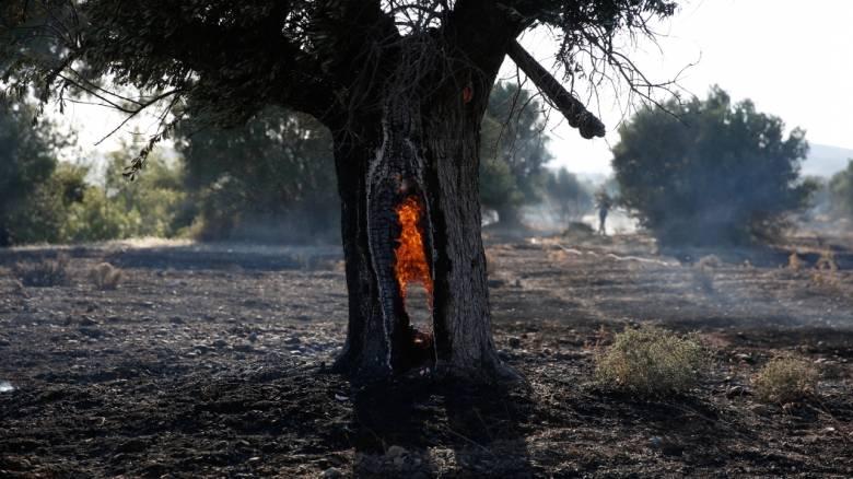 Πολύ υψηλός κίνδυνος πυρκαγιάς για σήμερα - Ποιες περιοχές κινδυνεύουν