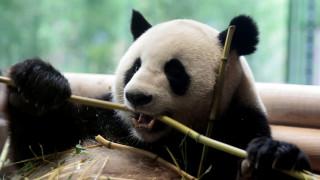Ένα σπάνιο μωρό πάντα έχει ξετρελάνει την Κίνα - Οι ιδιαίτεροι γονείς του