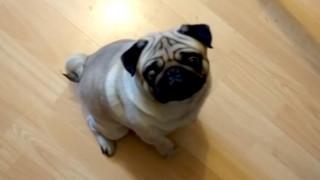 Δικάζεται γιατί βιντεοσκοπούσε τον σκύλο της φίλου του να χαιρετά ναζιστικά (vid)