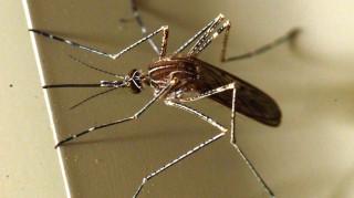 Δεύτερος θάνατος στην Ελλάδα από τον ιό του Δυτικού Νείλου
