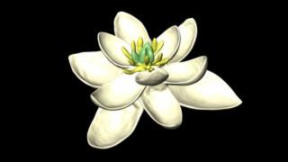 Είναι αυτό το πρώτο λουλούδι της Γης;