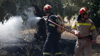 Πύργος: Φωτιά σε δασική έκταση στο Γεράκι Ηλείας