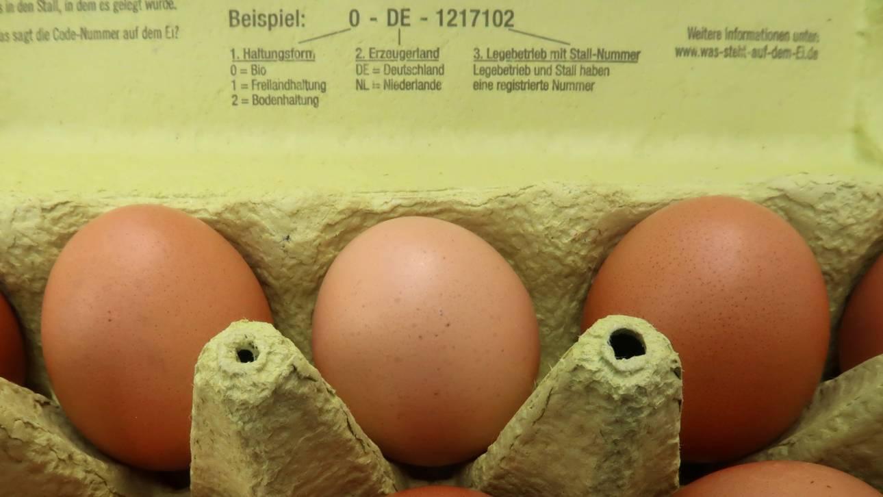 Συναγερμός για το νέο διατροφικό σκάνδαλο στην Ευρώπη με τα αυγά