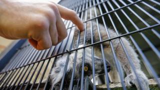 Λος Άντζελες: Βρέθηκαν 2000 ζώα σε άθλιες συνθήκες σε βιομηχανική αποθήκη