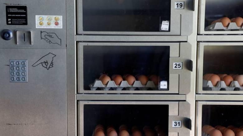 Μολυσμένα αυγά στην Ευρώπη: Η παρουσία του εντομοκτόνου ήταν γνωστή από το 2016