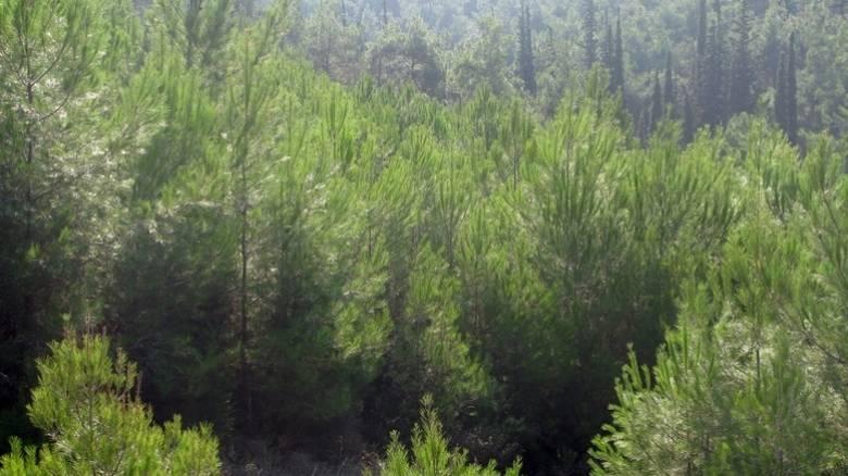 Παρατείνεται η εξαγορά δασικών εκτάσεων που είχαν εκχερσωθεί πριν το 1975 για γεωργική εκμετάλλευση