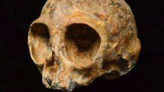 Βρέθηκε κρανίο 13 εκατ. ετών που ανήκε σε κοινό πρόγονο ανθρώπων - πιθήκων (pics)