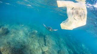 Αχαΐα: Τεράστια θαλάσσια χελώνα «παλεύει» με τα κύματα (vid)