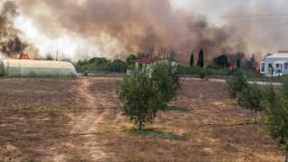 Μεγάλη πυρκαγιά ξέσπασε στα Φάρσαλα