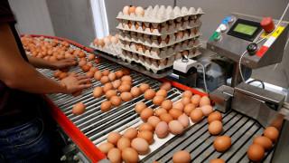Κομισιόν: Έκτακτη σύσκεψη για το διατροφικό σκάνδαλο με τα αυγά