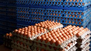 Μολυσμένα αυγά: Ο κίνδυνος για την υγεία είναι «πολύ χαμηλός»