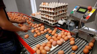 Γερμανός ευρωβουλευτής κατηγορεί την ΕΕ για το σκάνδαλο με τα μολυσμένα αυγά