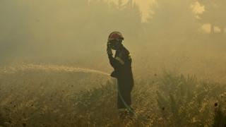 Στα όρια του ο μηχανισμός δασοπυρόσβεσης - 91 πυρκαγιές σε ένα 24ωρο
