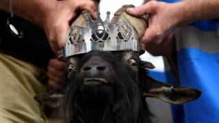 Ιρλανδία: Κατσίκα στέφθηκε... βασίλισσα (pics)