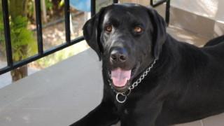 «Συνταξιοδοτήθηκε» ο αστυνομικός σκύλος Blanco - Το ευχαριστώ της αστυνομίας