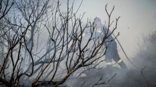 Ο Αντιπεριφερειάρχης Ανατολικής Αττικής κάνει τον πρώτο απολογισμό της καταστροφικής πυρκαγιάς