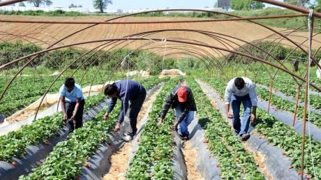 Έρευνα: Μεγάλη εκμετάλλευση των μεταναστών που απασχολούνται εποχικά στον αγροτικό τομέα