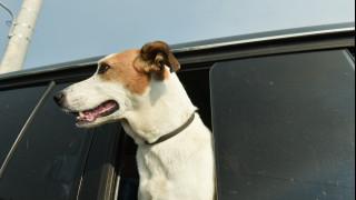 Πρόγραμμα υιοθεσίας αδέσποτων ζώων που τραυματίστηκαν στις φωτιές της Αν. Αττικής