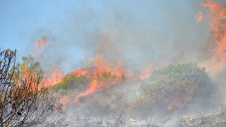 Σε ένα 24ωρο εκδηλώθηκαν 67 πυρκαγιές