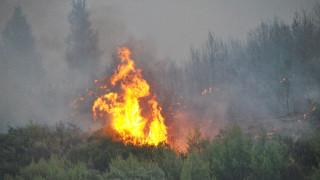 Μεγάλη πυρκαγιά στο Ρυτό Κορινθίας (pics)