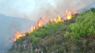 Δεν απειλεί οικισμούς η πυρκαγιά στο Ρυτό Κορινθίας