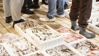 Θεσσαλονίκη: Κατασχέθηκαν 228 κιλά ακατάλληλα αλιεύματα