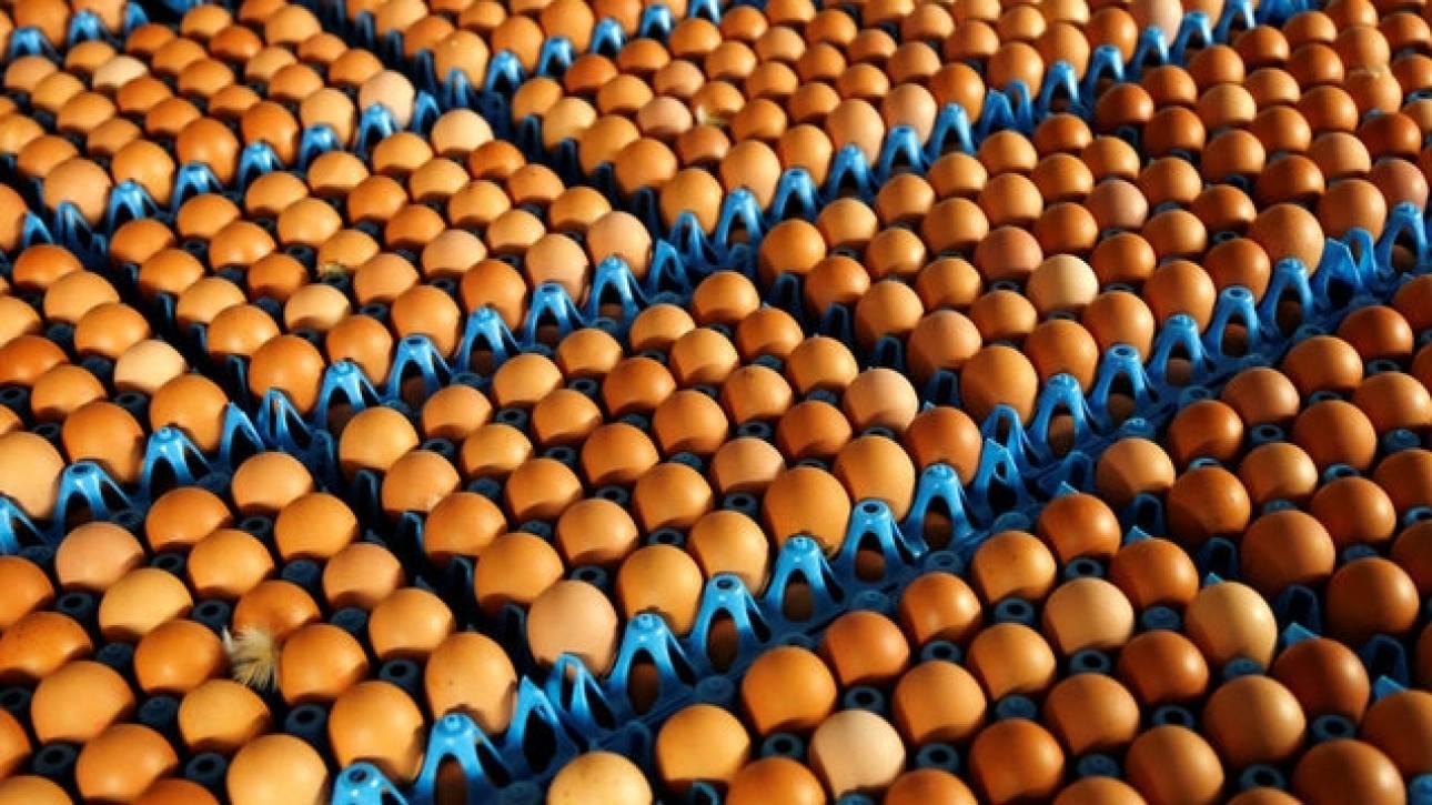 Πόσο θα κοστίσει στην Ολλανδία το σκάνδαλο με τα μολυσμένα αυγά